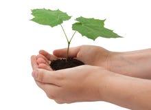 Träd i händer Royaltyfri Fotografi