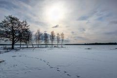 Träd i härlig fryst sjölandskap för eftermiddag sen vinter Arkivfoton