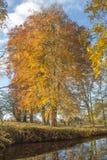 Träd i höst Royaltyfria Bilder