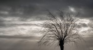 Träd i höst med holländsk himmel arkivfoto