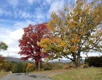 Träd i höst på landsväg II Fotografering för Bildbyråer