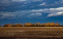 Träd i hösten som tänds av solen Arkivfoton