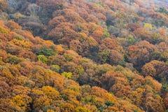 Träd i höstfärger Fotografering för Bildbyråer