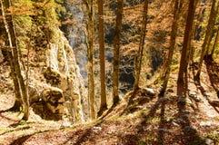 Träd i höstlig skog Arkivfoton