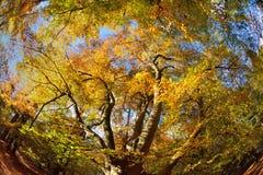 Träd i höstnedgång Arkivfoto