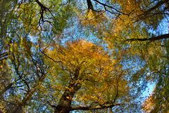 Träd i höstnedgång Arkivbilder
