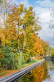 Träd i hösttid på kanalen Arkivfoto