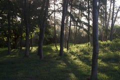 Träd i inställningssol Arkivfoton