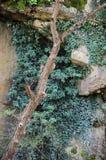 Träd i kanjonen på våren Arkivfoto