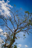 Träd i khaoen yai 13 00 Arkivbild