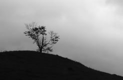 Träd i kullen fotografering för bildbyråer