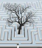 Träd i labyrinten Arkivfoto