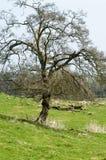 Träd i landskapet Arkivfoto