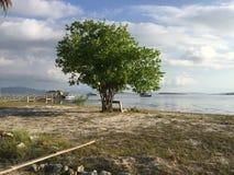 Träd i Lombok Royaltyfria Bilder