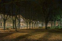 Träd i mörkret i Daugavpils stadsförsök Arkivfoto