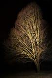 Träd i mörkret som är upplyst vid ljus Royaltyfri Bild