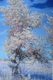 Träd i marsklan Arkivfoto