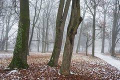 Träd i med den gröna murgrönan efter den första snön Arkivbild