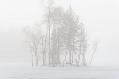 Träd i misten Arkivbild