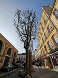 Träd i mitt av gatan arkivbilder