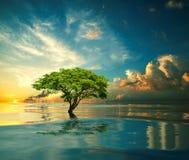 Träd i mitt av havet Fotografering för Bildbyråer