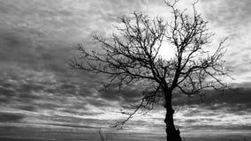 TRÄD I MITT AV INGENSTANS - svartvitt skott av ett träd Royaltyfria Bilder