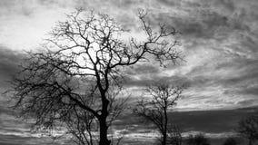 TRÄD I MITT AV INGENSTANS - svartvitt skott av ett träd Royaltyfri Foto