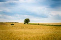 Träd i mitt om fält Arkivfoto