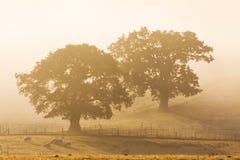 Tr?d i morgonmisten, Shropshire, England arkivbild