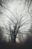 Träd i mystisk allhelgonaaftonskog med dimma Arkivfoton