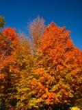 Träd i nedgången Fotografering för Bildbyråer