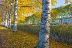 Träd i nedgångfärger längs en kanal i ett bostadsområde i solljus royaltyfria bilder