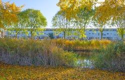 Träd i nedgångfärger längs en kanal i ett bostadsområde i solljus fotografering för bildbyråer