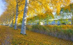 Träd i nedgångfärger längs en kanal i ett bostadsområde i solljus royaltyfri fotografi
