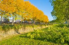 Träd i nedgångfärger längs en kanal i ett bostadsområde i solljus arkivbild