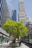 Träd i New York City mellan byggnader Arkivbilder