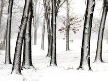 Träd i ny snö royaltyfria foton