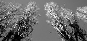 Träd i Odessa, Ukraina Fotografering för Bildbyråer