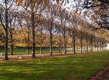 Träd i Paris royaltyfri foto