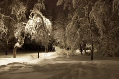 Träd i parkera efter ett tungt snöfall royaltyfri bild