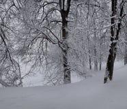 Träd i parkera efter ett tungt snöfall arkivbild