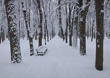 Träd i parkera efter ett tungt snöfall royaltyfria bilder