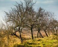 träd i parkera i vår, Royaltyfri Fotografi