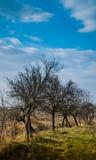 träd i parkera i vår, Arkivfoto