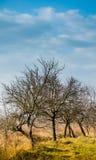 träd i parkera i vår, Fotografering för Bildbyråer