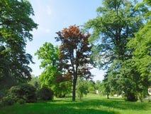 Träd i parkera på solig dag Royaltyfri Foto