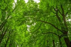 Träd i parkeraklon, med HDR Arkivbild