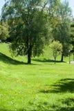 Träd i parkerasommardagen Arkivbilder
