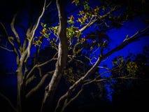 Träd i parque som är stor i Zaragoza på natten Royaltyfri Fotografi