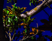 Träd i parque som är stor i Zaragoza på natten Royaltyfri Foto